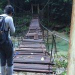 熱帯植物マレー半島トレンガヌ州の森への吊り橋 現地画像