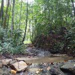 熱帯植物トレンガヌ州ジャーテの熱帯雨林 現地画像