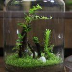 熱帯植物コケリウム プレミアムモス フィカス 管理方法