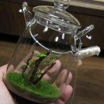熱帯植物コケリウム プレミアムモス ガラスポット 管理方法