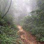 熱帯植物 タイ北部の山 森 滝 川
