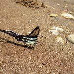 熱帯植物 綺麗な蝶 タイ北部チェンマイ