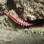 熱帯植物 赤い虫 Chiang Mai Thailand